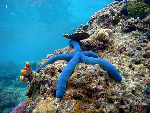 Top Dive Destinations in Palawan
