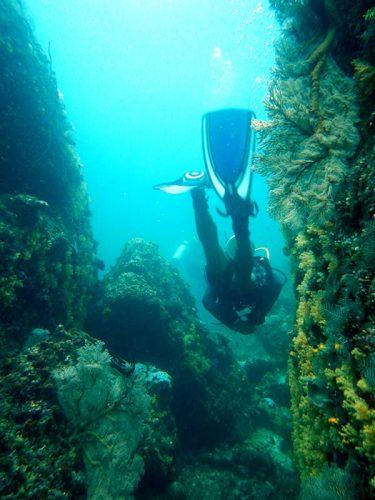 Dive Destinations in Palawan